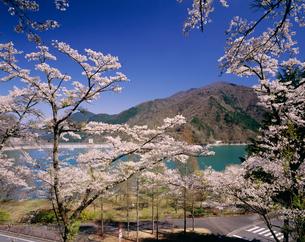 桜咲く春の奥多摩湖の写真素材 [FYI04025964]
