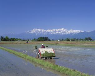 頸城平野の田植え風景と妙高連山の写真素材 [FYI04025970]