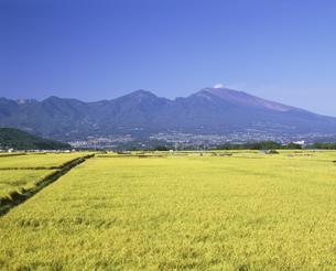 佐久平から稲穂と浅間山を見るの写真素材 [FYI04025975]
