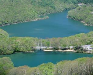 新緑の志賀高原琵琶池と丸池の写真素材 [FYI04025984]