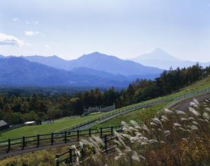 県立まきば公園から富士山を見るの写真素材 [FYI04025997]