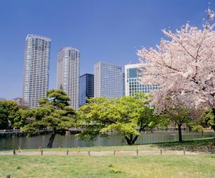 桜咲く浜離宮から汐サイトを見るの写真素材 [FYI04026037]