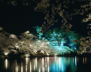 高田城跡公園の夜桜の写真素材 [FYI04026052]