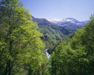 新緑の秋山郷と残雪の苗場山の写真素材 [FYI04026055]
