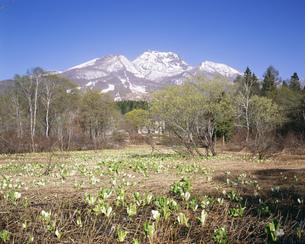 イモリ池のミズバショウと妙高山の写真素材 [FYI04026058]