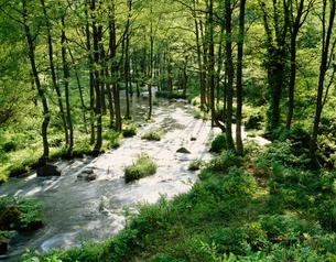朝の長瀬川の写真素材 [FYI04026060]