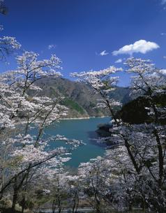 桜咲く春の奥多摩湖の写真素材 [FYI04026074]