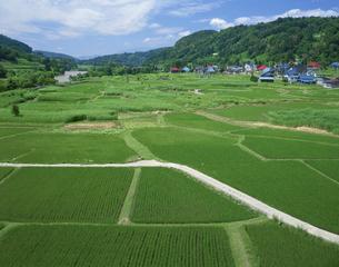 雨あがりの青田 千曲川 長野県の写真素材 [FYI04026076]