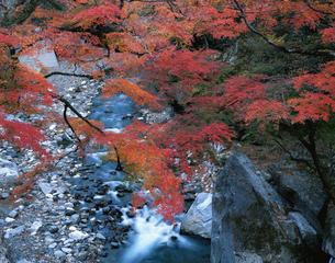 中津峡の紅葉の写真素材 [FYI04026089]