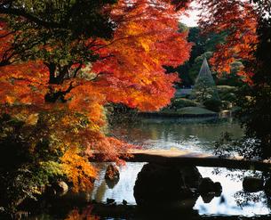 六義園の紅葉の写真素材 [FYI04026105]