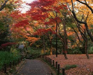 北の丸公園の紅葉の写真素材 [FYI04026108]