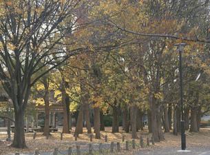 晩秋の善福寺川緑地の写真素材 [FYI04026126]