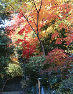 紅葉の万葉公園の写真素材 [FYI04026449]
