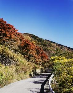 椿ライン 椿台の紅葉の写真素材 [FYI04026454]