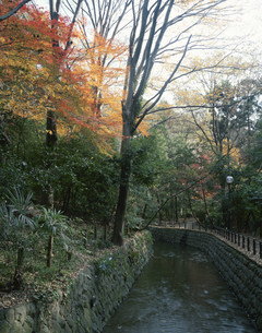 秋の等々力渓谷の写真素材 [FYI04026480]
