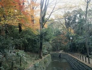 秋の等々力渓谷の写真素材 [FYI04026490]