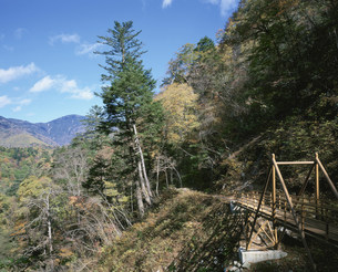 秋の西沢渓谷 さわぐるみ橋の写真素材 [FYI04026737]