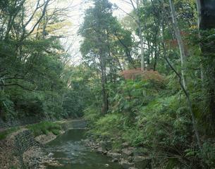 秋の等々力渓谷の写真素材 [FYI04026896]
