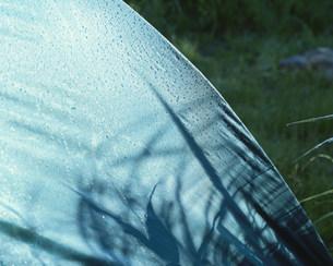 テントと朝露の写真素材 [FYI04026915]