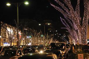 表参道のクリスマスイルミネーションの写真素材 [FYI04027069]