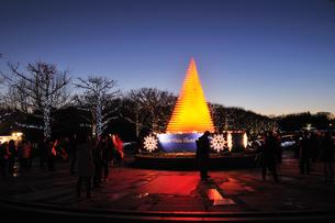 昭和記念公園のクリスマスイルミネーションの写真素材 [FYI04027072]