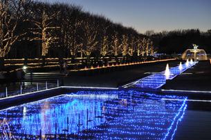 昭和記念公園のクリスマスイルミネーションの写真素材 [FYI04027081]