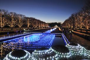 昭和記念公園のクリスマスイルミネーションの写真素材 [FYI04027084]