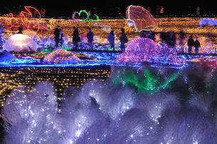 昭和記念公園のクリスマスイルミネーションの写真素材 [FYI04027085]