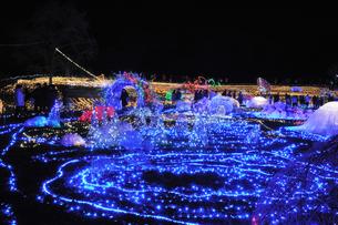 昭和記念公園のクリスマスイルミネーションの写真素材 [FYI04027087]