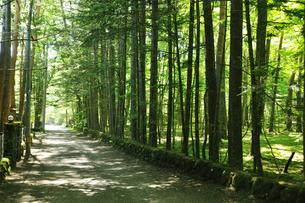 軽井沢の別荘地の写真素材 [FYI04027096]
