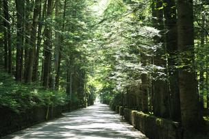 軽井沢の別荘地の写真素材 [FYI04027099]