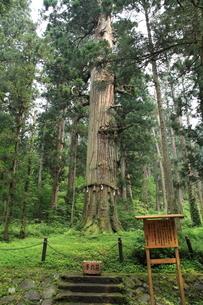 羽黒山 爺杉の写真素材 [FYI04027209]