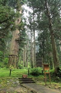 羽黒山 爺杉と五重塔の写真素材 [FYI04027210]