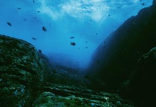 与那国島海底遺跡ポイントの写真素材 [FYI04027250]
