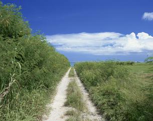 海へ続く道沖縄県の写真素材 [FYI04027443]