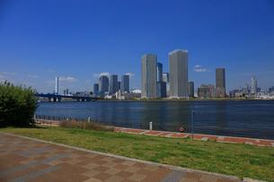 豊洲公園から望む晴海周辺ビル群の写真素材 [FYI04027537]