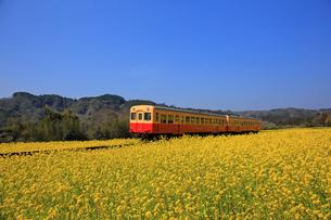 小湊鉄道と菜の花畑の写真素材 [FYI04027633]