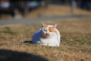 猫の写真素材 [FYI04027649]