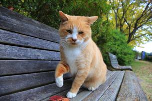 猫の写真素材 [FYI04027656]