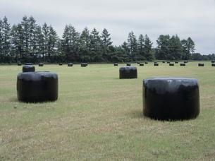牧草のラップの写真素材 [FYI04027733]