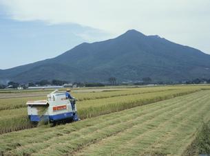稲刈りと筑波山の写真素材 [FYI04027739]