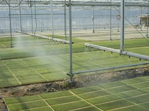 育苗用自動灌水装置の写真素材 [FYI04027770]