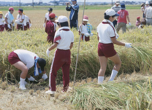 小学生の稲刈り体験の写真素材 [FYI04027778]