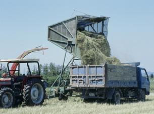 サイレージ用牧草の集草の写真素材 [FYI04027779]