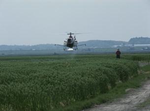 ラジコンヘリによる農薬散布の写真素材 [FYI04027811]