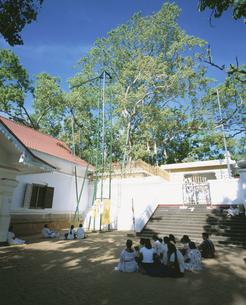 スリー・マハー菩提樹 アヌラーダブラ スリランカの写真素材 [FYI04027900]