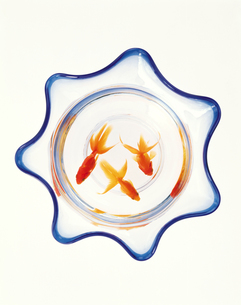 金魚鉢の俯瞰の写真素材 [FYI04028084]