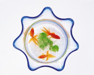 金魚鉢の俯瞰の写真素材 [FYI04028085]