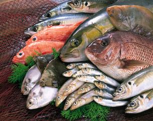 魚介類の写真素材 [FYI04028154]