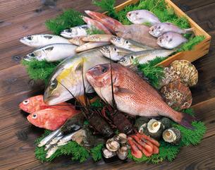 魚介類の写真素材 [FYI04028156]